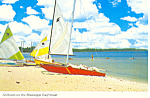 Click here to enlarge image and see more about item cs1679: Sailboats on the Mississippi Gulf Coast Postcard cs1679