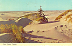 Sand Dunes, Oregon Postcard 1972