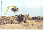 Click here to enlarge image and see more about item cs1719: Loading Sugar Cane Postcard