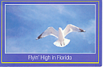 Click here to enlarge image and see more about item cs1742: Flyin High in Florida  Postcard cs1742 1988