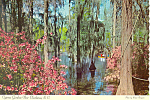 Cypress Gardens, Charleston, SC Postcard