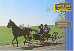 Amish Open Buggy Postcard