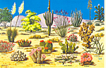 Click here to enlarge image and see more about item cs1996: Cacti and Desert Flora of the Southwest  Postcard