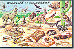 Wildlife of the Desert  Postcard cs1997