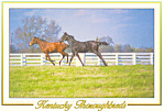 Kentucky Thoroughbreds Postcard 1997