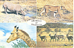 Click here to enlarge image and see more about item cs2077: Animals of Rhodesia  Postcard cs2077