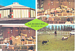 Click here to enlarge image and see more about item cs2140: Activities at Agrodome, Rotorua, New Zealand Postcard