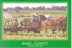 Amish Tobacco Harvest PA Postcard cs2211