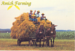 Amish Mule Drawn Hay Wagon , PA, Postcard cs2213