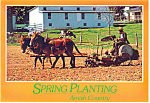 Click here to enlarge image and see more about item cs2216: Amish Spring Tobacco Planting  PA Postcard cs2216