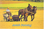Amish Farming with Mules , PA, Postcard cs2218