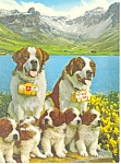 St Bernard Dogs with Puppies Postcard