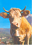Click here to enlarge image and see more about item cs2223: Cow of the Simmental Valley Postcard
