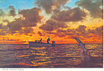 Florida s Famous Fishing Postcard cs2225