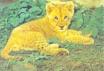 Click here to enlarge image and see more about item cs2288: Lion Cub Postcard cs2288