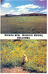 Click here to enlarge image and see more about item cs2348: Wichita National Wildlife Refuge Oklahoma Postcard cs2348