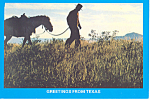Texas Cowboy and Horse Postcard