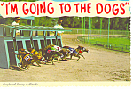 Click here to enlarge image and see more about item cs2469: Greyhound Racing in Florida Postcard