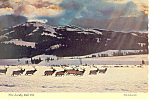 Click here to enlarge image and see more about item cs2504: The Lordly Bull Elk Postcard cs2504