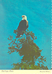 Click here to enlarge image and see more about item cs2505: The Bald Eagle Alaska Postcard