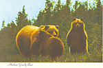 Click here to enlarge image and see more about item cs2508: Alaskan Grizzly Bear Postcard cs2508