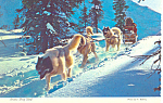 Click here to enlarge image and see more about item cs2540: Alaska Dog Sled Postcard cs2540