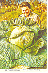 Click here to enlarge image and see more about item cs2545: 44 Pound Cabbage Alaska,  Postcard