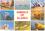Animals of Alaska Postcard