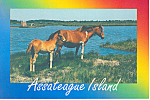 Click here to enlarge image and see more about item cs2694: Mare and Her Colt on Assateague Island Maryland cs2694