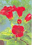 Flowers Srdecne blahozelanie Czech Postcard