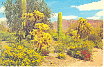 Click here to enlarge image and see more about item cs2810: Cactus in the Desert Postcard cs2810