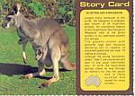 Click here to enlarge image and see more about item cs2816: Australian Kangaroo Story Card
