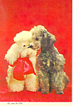 Two Cute French Poodles Postcard cs2818