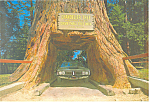 Chandelier Drive Thru Redwood,California