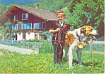 Young Swiss Lad in Native Dress Saint Bernard cs3052