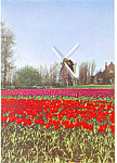 Click here to enlarge image and see more about item cs3067: Springtime in Holland KLM Issued Card cs3067
