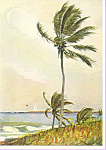 Palm Tree Nassau Winslow Homer Postcard cs3349