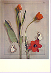 Click here to enlarge image and see more about item cs3352: Tulips Betty Hahn Postcard cs3352