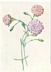 Click here to enlarge image and see more about item cs4017: Carnation Postcard cs4017