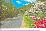 Click here to enlarge image and see more about item cs4066: Dogwood  in Bloom North Carolina State Flower  cs4066
