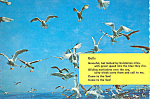 Seagulls in Flight Postcard cs4169