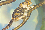 Click here to enlarge image and see more about item cs4170: Cat on a Limb Postcard cs4170