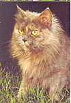 Click here to enlarge image and see more about item cs4207: Long Haired Cat Postcard cs4207