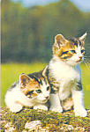 Click here to enlarge image and see more about item cs4208: Two Tabby Kittens Postcard cs4208