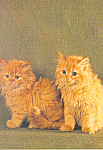 Two Orange Long Hair Kittens Postcard cs4209