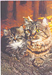 Click here to enlarge image and see more about item cs4213: Tabby Cat Postcard cs4213