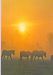 Herd of Horses in morning fog Postcard cs4217