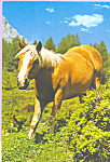 Click here to enlarge image and see more about item cs4220: Palomino Horse Postcard cs4220