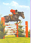 Click here to enlarge image and see more about item cs4222: Horse taking a jump Postcard cs4222