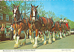 Click here to enlarge image and see more about item cs4284: Budweiser Clydesdale 8-Horse Hitch Postcard cs4284
